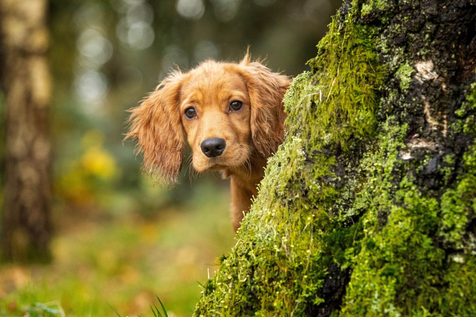 Pet Photography – A knowhow
